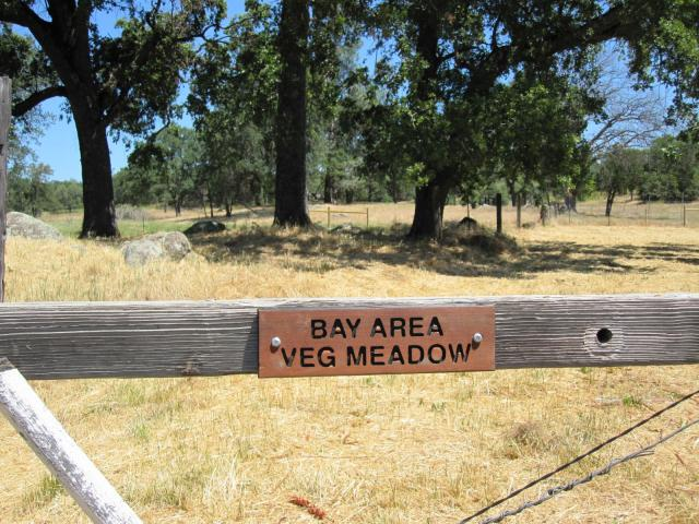 """Bay Area Veg Meadow"" at Animal Place"