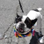 Canine visitor - BAVeg Outreach booth - LBGT Pride 2010