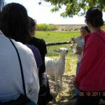 Our tour guide Christine introduces us to the goats.