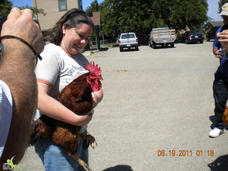 Christine of HH breaks up a chicken fight.