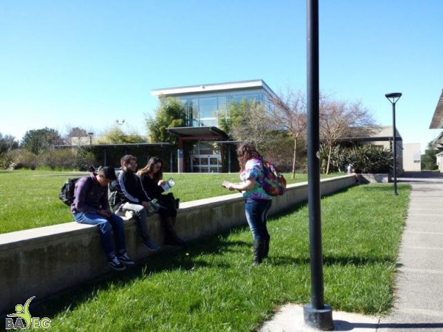Students reading leaflets