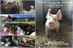 Tour Invite to Herd & Flock Animal Sanctuary, Vacaville, CA