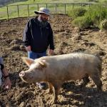 Chris wondering how he can get the pigs to come dig over our backyard...