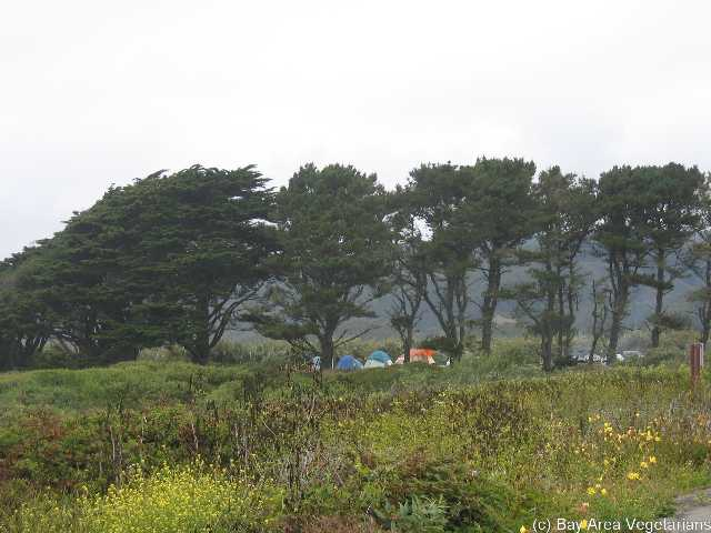 Our campsite, behind the trees