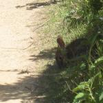 Wild bunny at San Pedro Valley Park, Pacifica