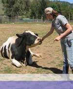 BAVeg Pledges $500 to Animal Place